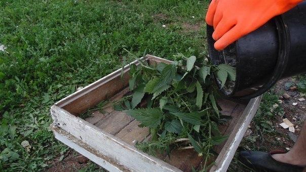 крапива - волшебное натуральное удобрение для растений крапива — самый эффективный стимулятор роста — в ней много азота, кремния, железа, калия, кальция, серы.такая подкормка особенно хороша
