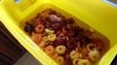 Подготовка луковиц гладиолусов к посадке весной Зимнее хранение в холодильнике