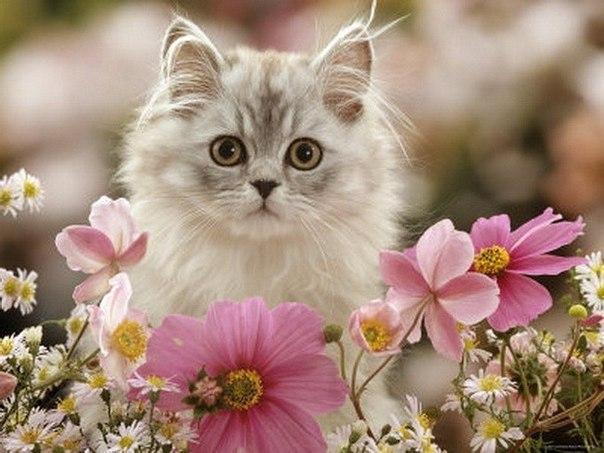 Фотки котов с цветами