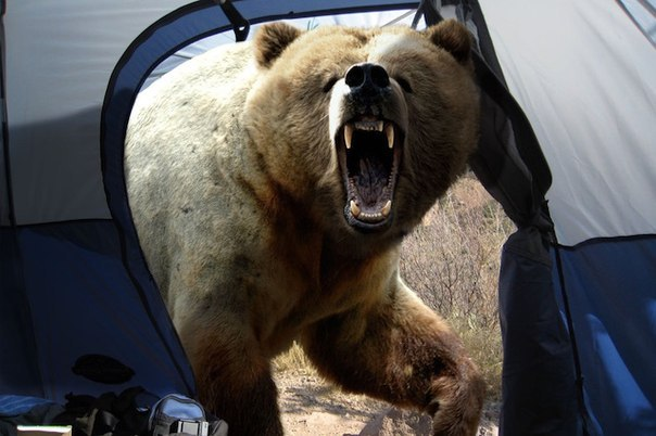 Последнее фото Мошио Хирошино, известного японского фотографа дикой природы. Растерзан медведем на просторах Камчатки 8 августа 1996 года. Перед смертью он решил сделать свой лучший кадр...