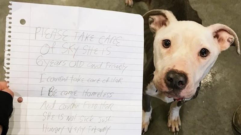 Тощая исхудавшая собака принесла записку, от которой хотелось заплакать – Кот Тимка