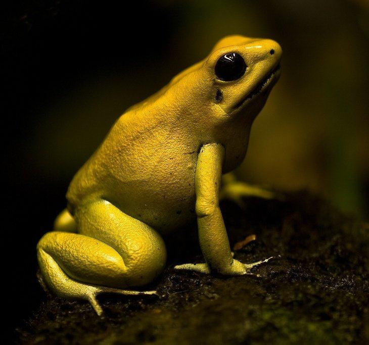 10 самых опасных животных ядов на земле.