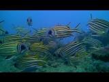 Любопытные рыбы-белки на Khram Wreck | Дайвинг в Паттайе