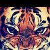 ♥Tигры♥