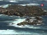 BBC Мир природы. Большая Белая Акула. Живая легенда