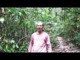Эндуро-тур, пробиваемся через джунгли и лианы. Где там твоя дрочилка? :)