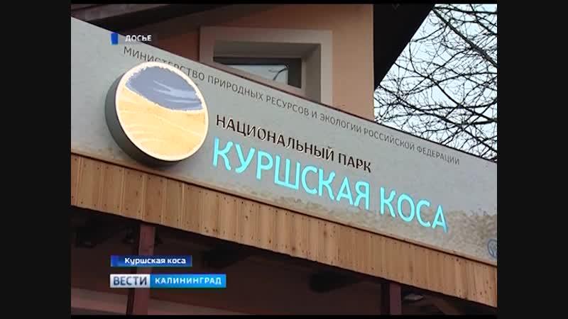 Нацпарк и посёлки Куршской косы подключили к энергосистеме региона