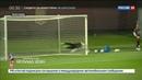 Новости на Россия 24 Увидеть Красную фурию сборная Испании провела открытую тренировку в Краснодаре