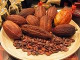 Как выращивают и обрабатывают какао