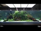 Aquascaping Mini Oceanario in memory of Amano Sensei – Aqua Project Zoomark 2017
