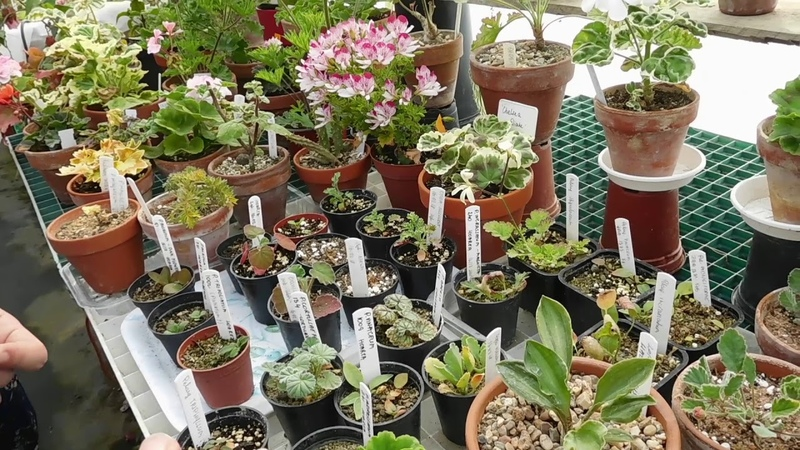 VIP visit Greenhouse in May