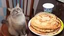 Russian Pancake Song (Blin) · coub, коуб