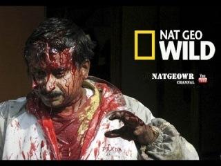 Самые опасные убийцы - Ужасные нападения животных на людей - Уникальные кадры / Премьера 2014 / NGW