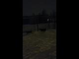 Зима....дубль 2 )))