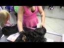 Натуральные и искусственные парики:описание и отличие