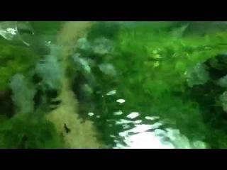 Aquascape - the new art of aquariums