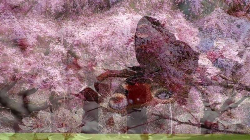 A andorinha da primavera - Madredeus