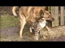 Секс,порно с кошками,котами и с животными Кошка с собакой занимаются сексом!!!