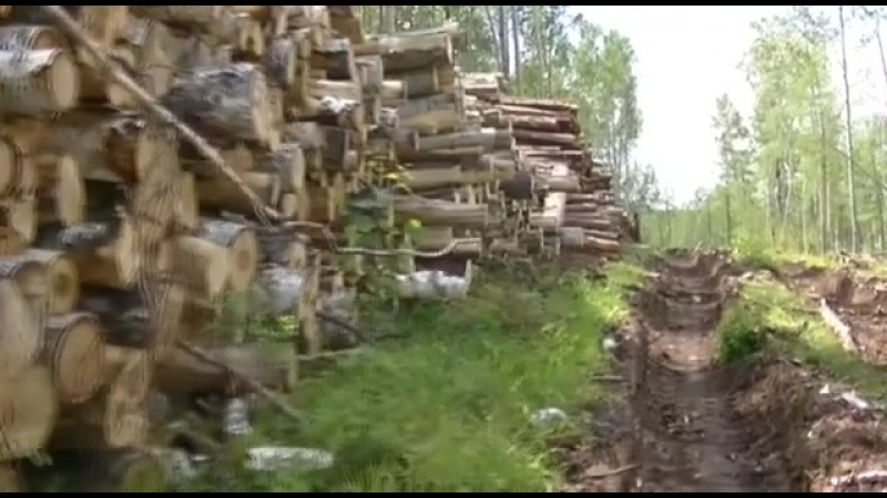 Местные жители в Иркутске незакнонно рубят лес на дачах