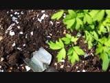 9 веских поводов не отправлять яичную скорлупу в мусорку!