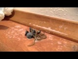 Нечто вылезло из убитого паука Смотреть интересное видео, удивительное и невероятное  Непознанное