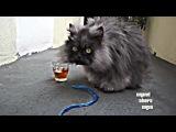 коты похожи из игры ГТА5 на главных гироев