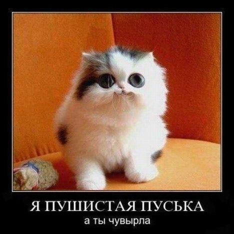 http://cs14115.userapi.com/c7008/v7008113/14e1/g0x0OajLydo.jpg