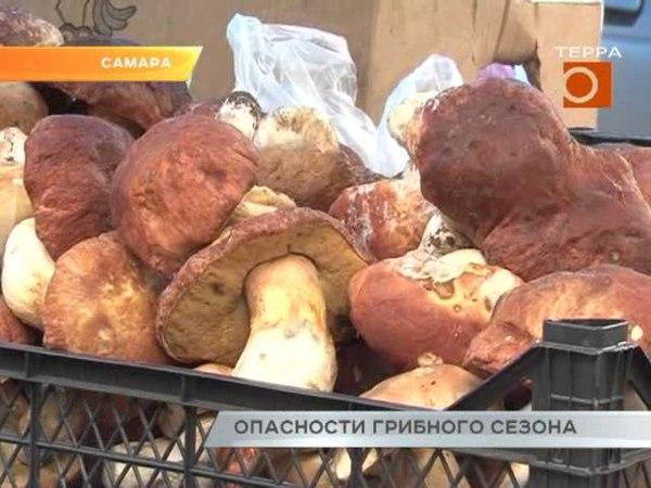 В Самарской области десятки отравлений грибами