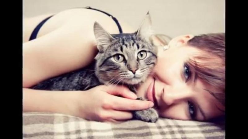 Серые кошки_ дымчатая удача-spian--scscscrp