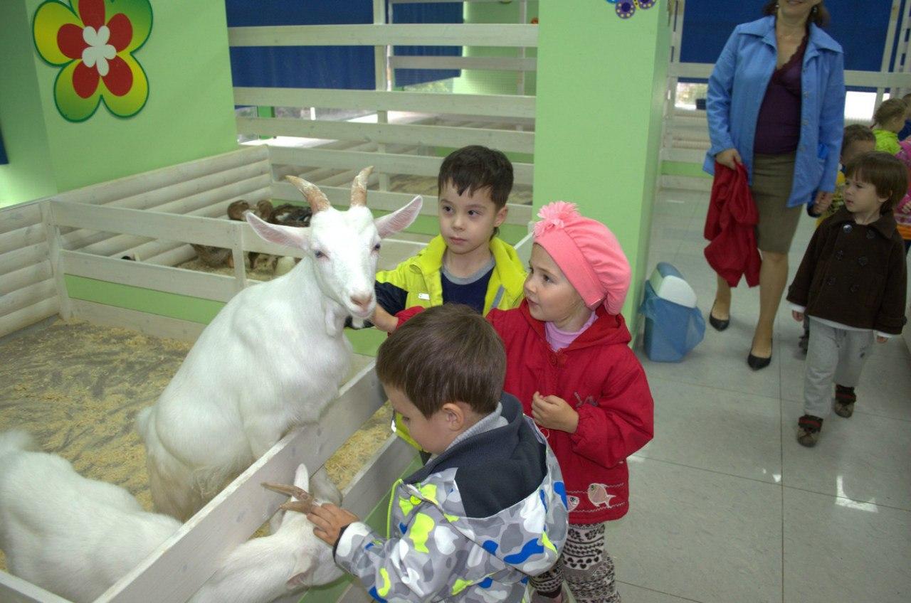 Частный детский сад в контактном зоопарке