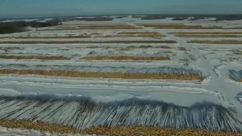 И снова о вырубаемых и вывозимых в Китай сибирских лесах. Первомайский район Томской области. Снято с квадрокоптера