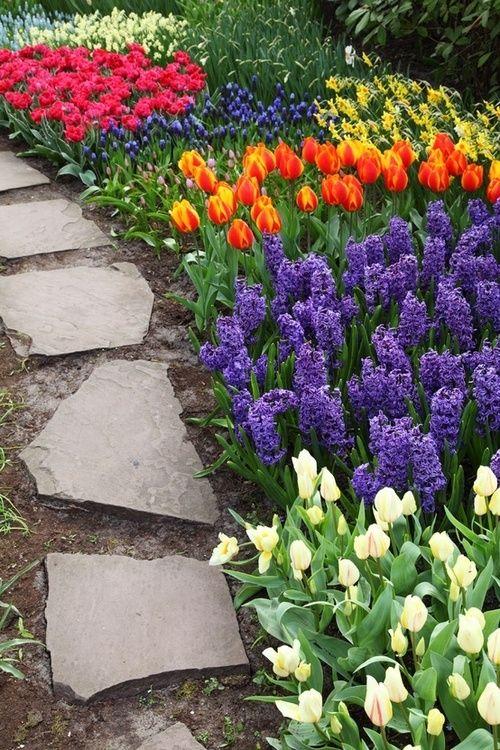 Где лучше посадить луковичные цветы