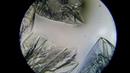 Кристаллизация лимонной кислоты под микроскопом. Crystallization of citric acid under a microscope.