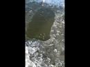 Рыбалка в пруде