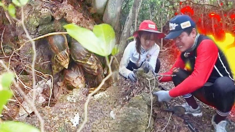 이연복·루, 정글 부녀의 치열한 생존 '왕달팽이 줍줍' @김병만의 정글의 법칙 350549