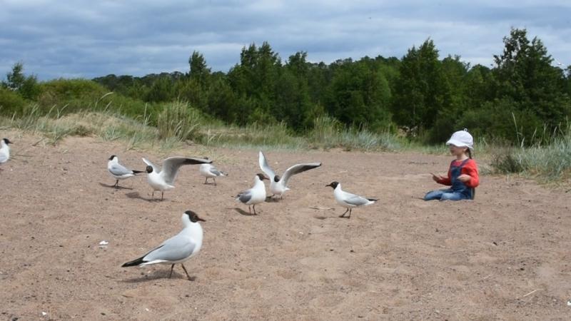 Есенька и чайки