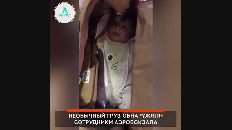 Сумка с похищенным ребенком | АКУЛА