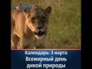 Календарь 3 марта Всемирный день дикой природы