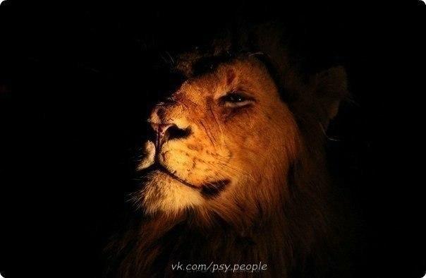 Мудр не тот, кто доказал что-либо, а тот, кто, зная истину, не стал спорить.