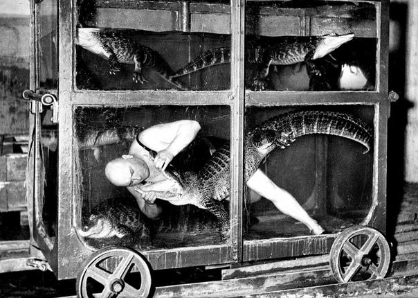Артист цирка борется с крокодилом в вагоне-аквариуме