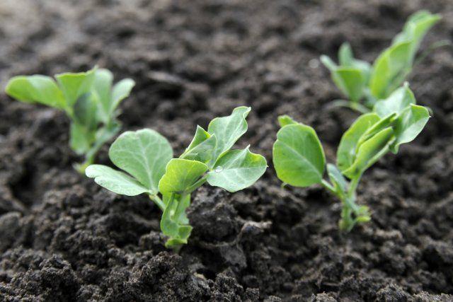 Что посадить в огороде в сентябре?