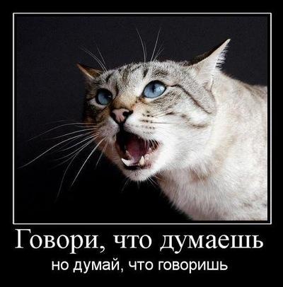 Ramal Memmedov, 10 апреля 1980, Санкт-Петербург, id218371432