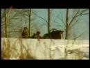 Зямля Беларуская Первый национальный 07 02 2010 Шуміліна Вяртанне да вытокаў