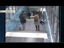 Мигрант избил и оплевал женщину с детьми в шведском метро 2016 01 23