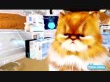 Kittend - ухаживай за котятами в виртуальной реальности (новый трейлер)
