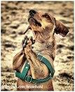 Мы любим свою собаку и не хотим, чтобы она менялась к лучшему; а в людях, которых мы любим…