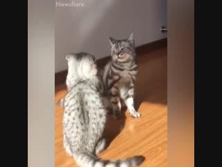 Эти котики сделали мой день - vk.com/tricks_lf