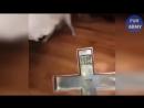 ЛУЧШИЕ ПРИКОЛЫ 2018 ЯНВАРЬ - Cамые смешные видео - Best Funny videos, Fail, Jokes