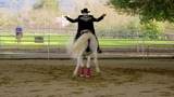 How to Survive as an Indie Filmmaker Part 1 Centurion the Dancing Horse.