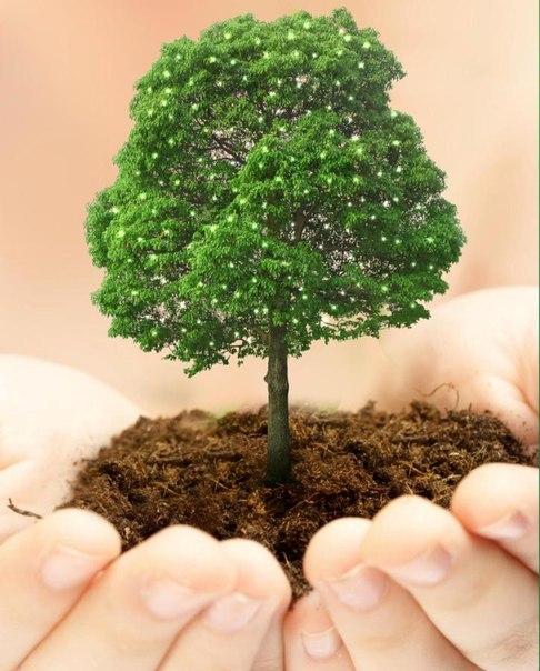 Хадис о том, кто посадит дерево